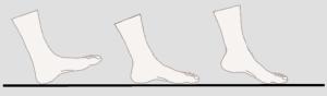 heel, midfoot, forefoot