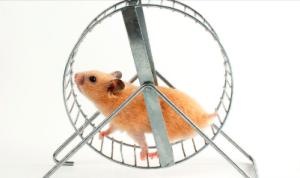 Boring Cardio Hamster Wheel